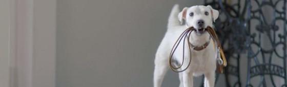 A dog that sounds like a car…